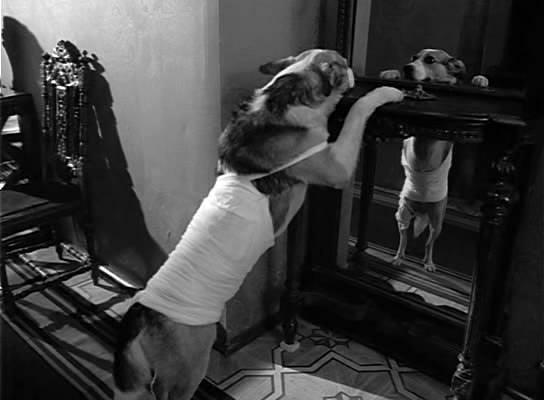 Я красавец. Быть может, неизвестный собачий принц. Инкогнито