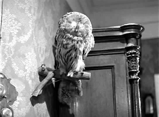 - А сову эту пишущий сии строки разъясним...